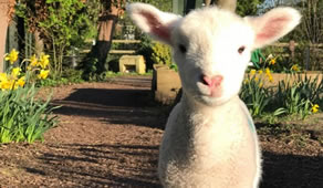 Donate To Help Save Deen City Farm